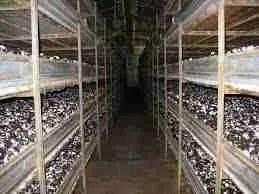 Spazi Confinati in Agricoltura - serre