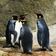 Penguin in Echtzeit
