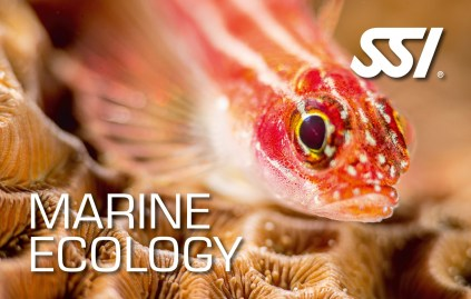 Specialty Marine Ecology SSI