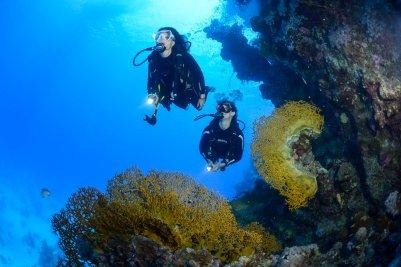 Duiken en genieten van de schoonheid onderwater.