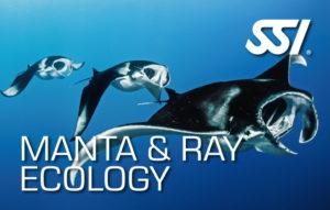 ssi specialty manta & ray ecology