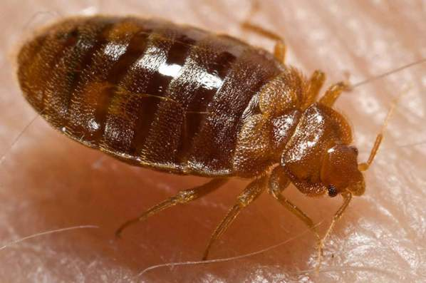 how to find hotel bed bugs