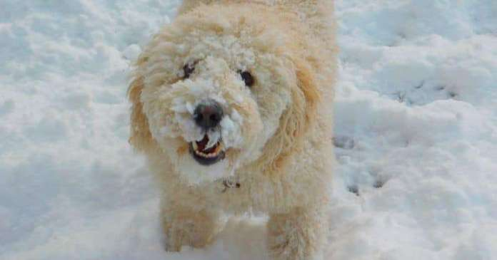 PDSA offers tips on keeping pets warm