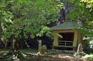 生涯桜を愛でた西行は吉野に庵を結んだこともあります。