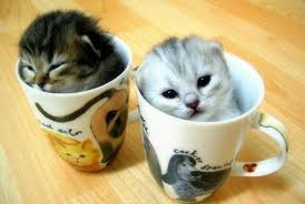 kittensinmugs