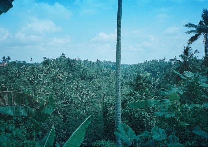 bali view nature