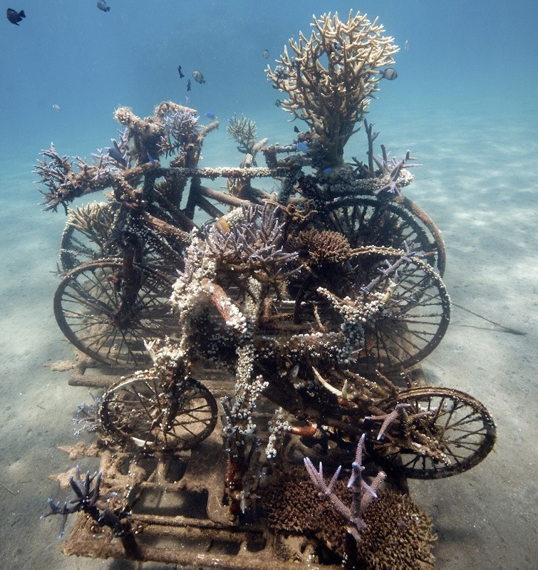 Sculpture of the bicycles which has well developed corals growing on it, located in Permuteran. Photo by Jeremy Ferris