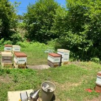 Sweet Sustainability - Miyajima Honey Bee Farm