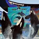 SeaWorld Show