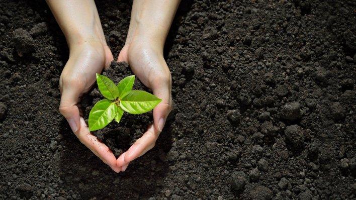 joy and the environment | inc.com