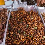 This St. Louis Startup Believes Crickets Might be the Food of the Future