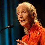 In Eloquent Google Doodle, Dr. Jane Goodall Teaches a Life Lesson That Goes Way Beyond Earth Day
