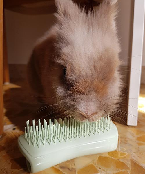 Prulli con Puppy Brush Pet Teezer