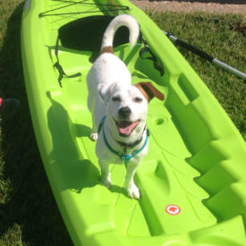 Jack Russel Dog Training Mandeville LA