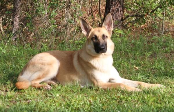 Dog Training For Ponchatoula LA