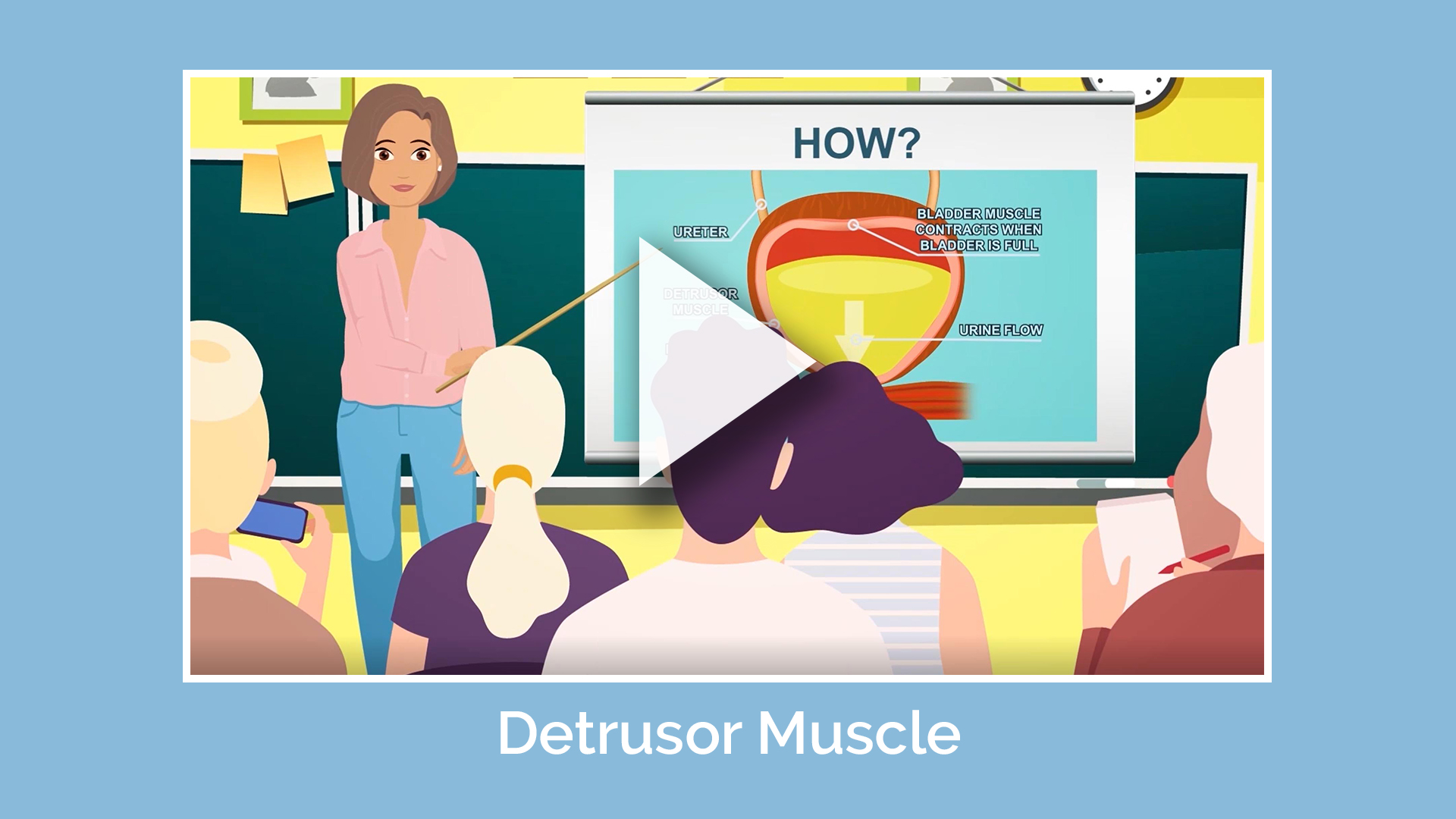 Detrusor Muscle Animation Video