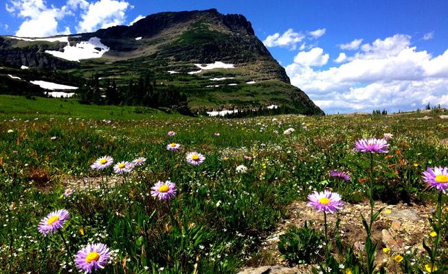 Wildflowers in a field of green grass