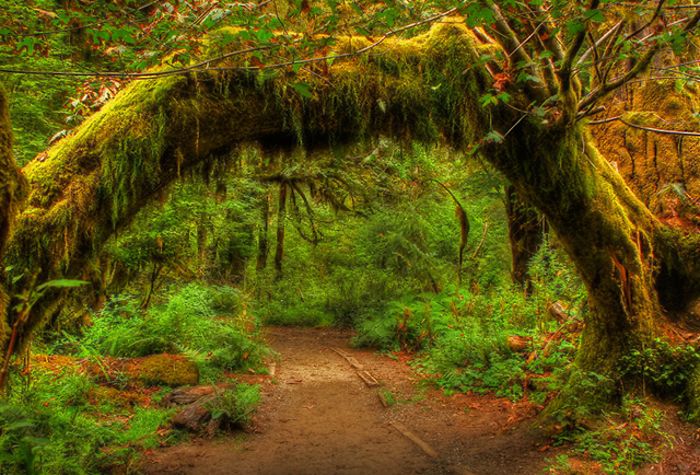 45 Deep Forest Photographs  Incredible Snaps