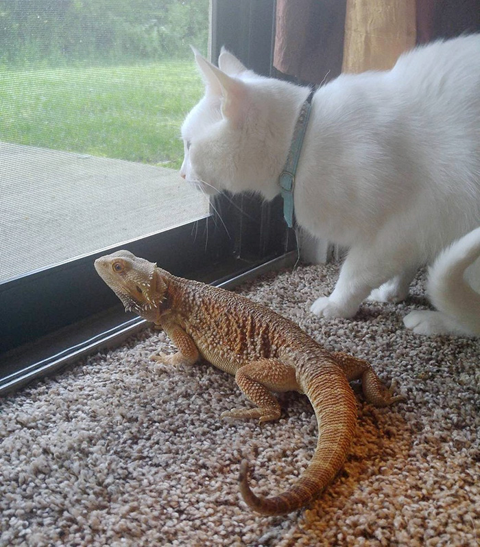 Cute See The Incredible Friendship Between Cat And The