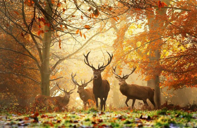 Fall Evening Wallpapers Beautiful Wildlife Photography Examples Incredible Snaps