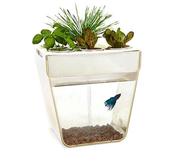 Aquafarm-Aquaponics-Fish-Garden-02