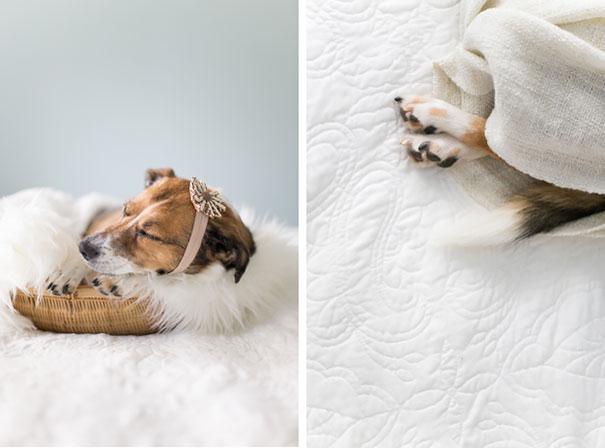 Hilarious Newborn Shoot Stars A Dog Instead Of Baby