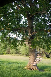 A Spiral Staircase That Attaches To Trees
