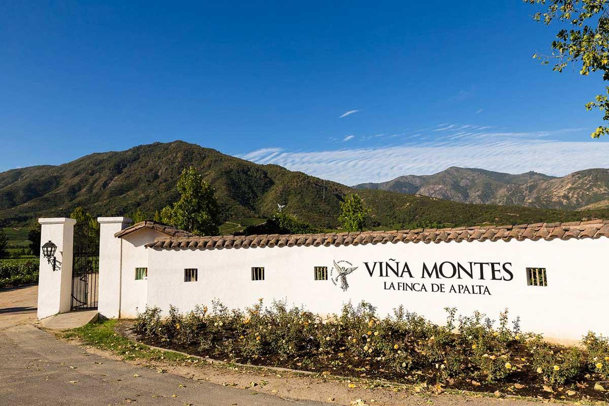 Wine Day Colchagua Premium - Viña Montes