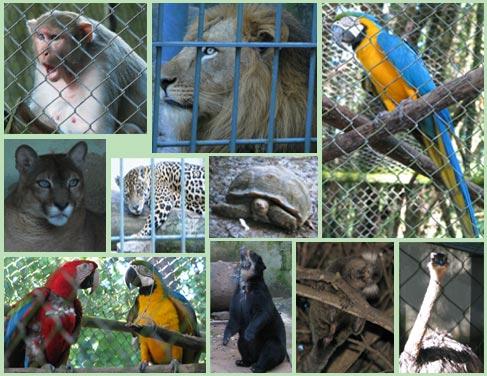 """Parque Zoo Botânico Arruda Câmara: A """"bica"""", em João Pessoa"""