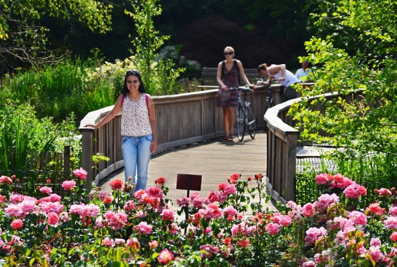A beleza do Queen Mary's Garden, num dos Parques de Londres