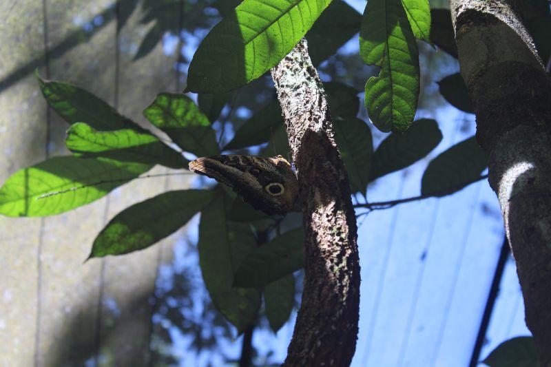Musa Manaus: Visite o Museu da Amazônia e experimente a floresta amazônica em Manaus