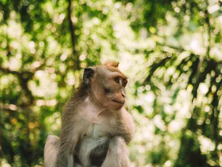 brown monkey sitting on brown rock