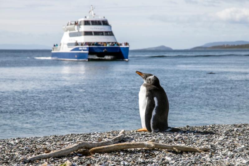 ver pinguins no ushuaia