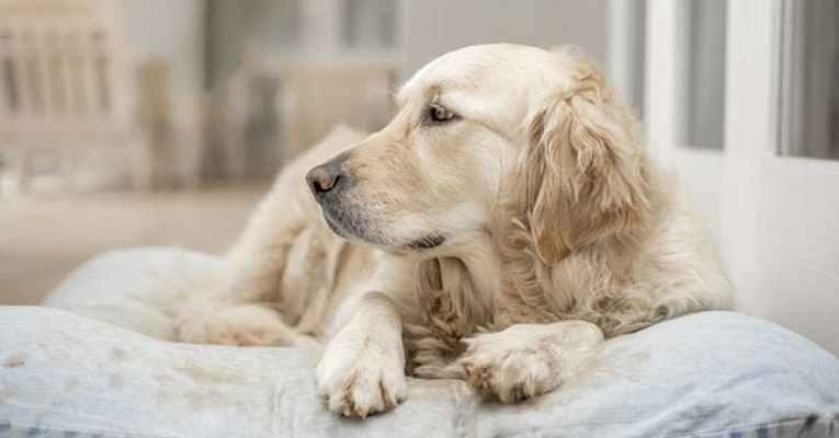 Cani in passerella alla Favorita di Palermo