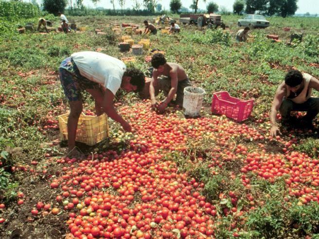 Vittoria, raccoglievano pomodori nelle serre per 4 euro