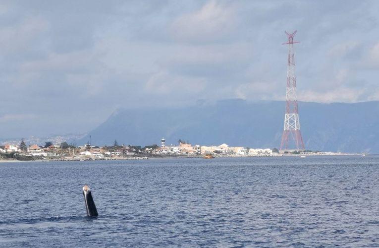 'Codamozza' ancora nei nostri mari