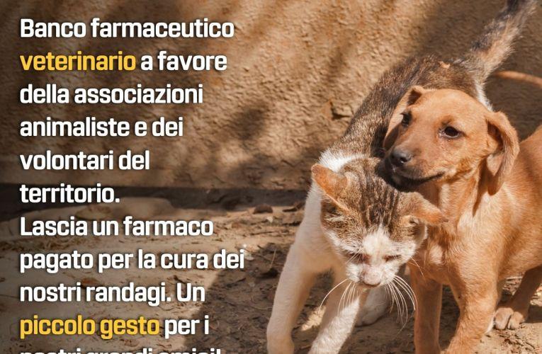 Deputati M5S avviano raccolta del farmaco per i randagi di Messina e provincia