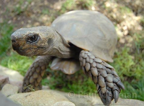 a turtle s dream