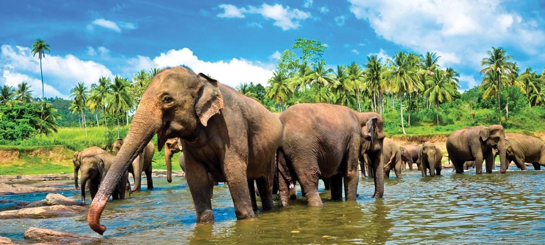 World Bank clarifies its position on Yala National Park