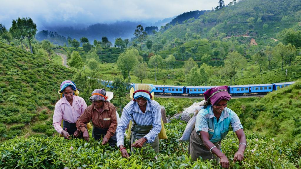 Govt. brews Rs. 12 b in loans to boost tea