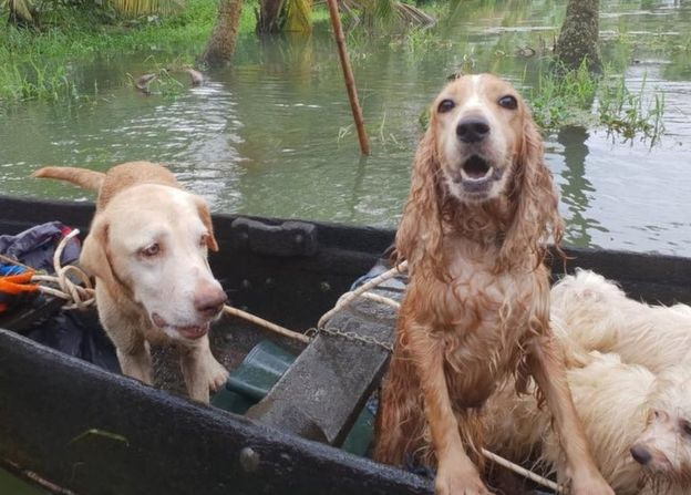 India's 'biggest' pet rescue operation in Kerala floods