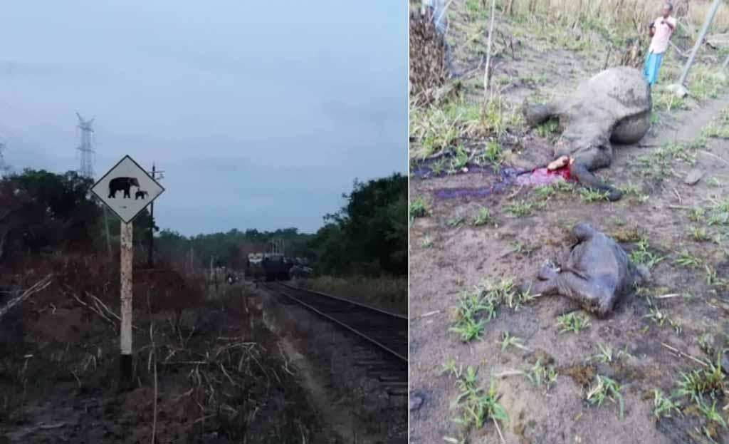 Four elephants killed, train derailed in North Central Sri Lanka