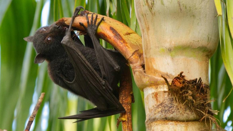 Sri Lanka keeping a close eye on Nipah virus