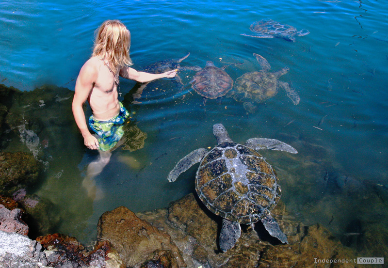 Swimming with turtles Samoa