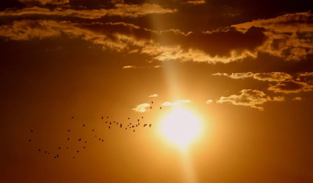 sunset-1625073_1280