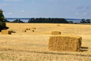 Denmark countryside field