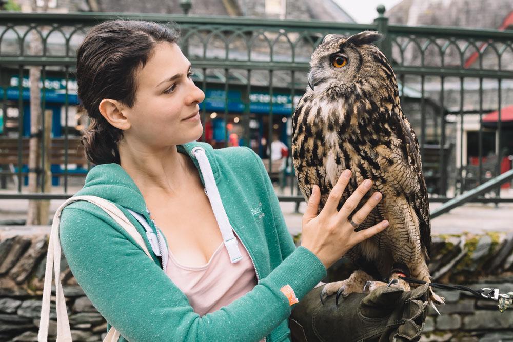 Ambleside, Lake District, Cumbria, England, owl