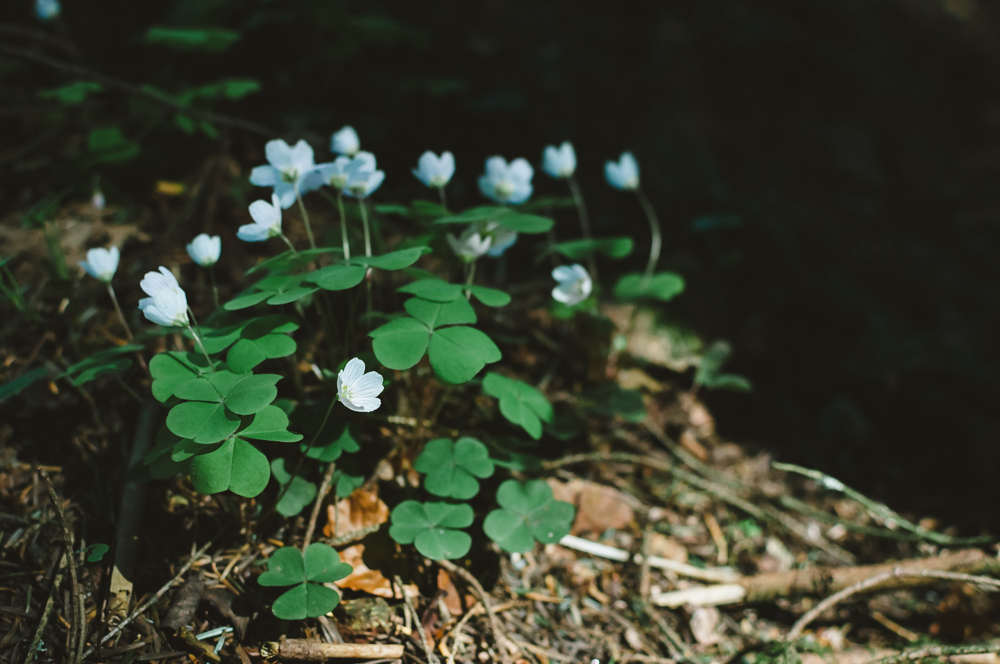 Black Forest, Schwarzwald, Forêt Noire
