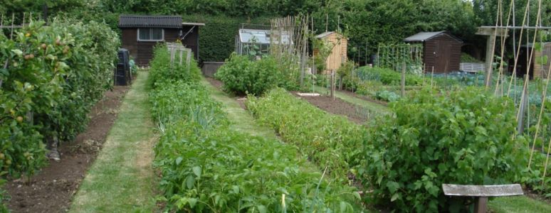allotments in derby in