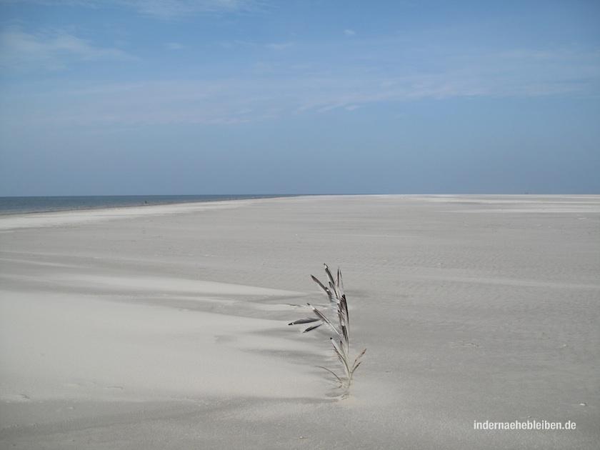 Die Sandbank von Westerhever